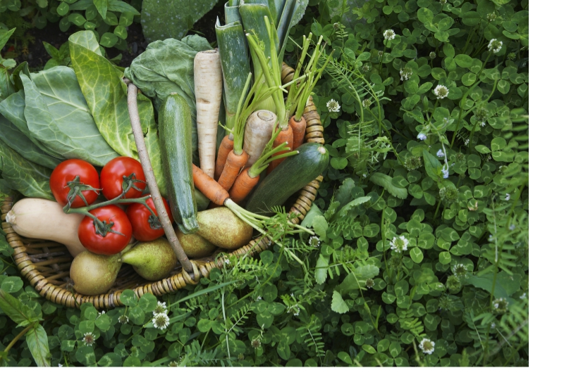 sayuran ibu bersalin